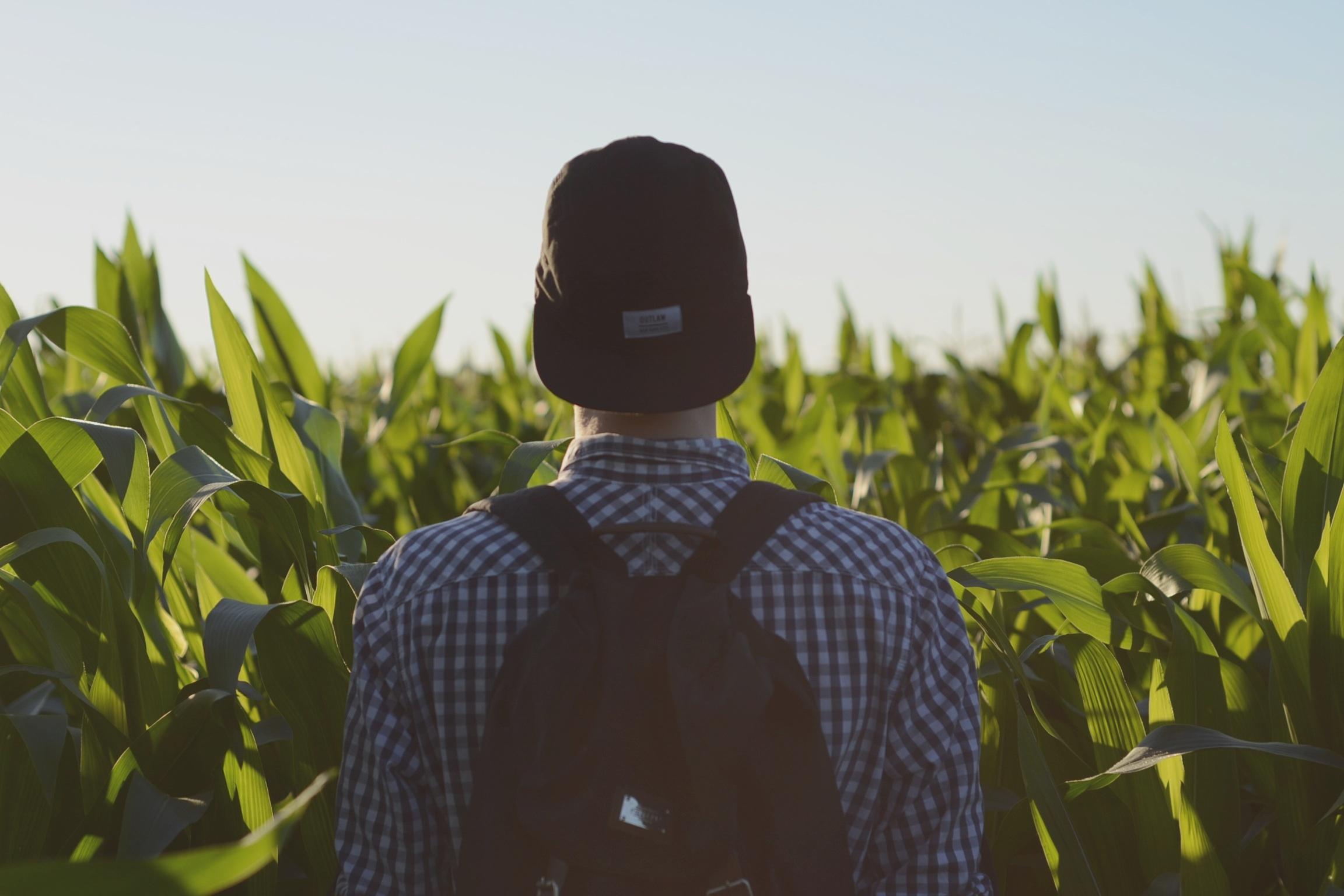 buy w back toward camera looking into corn field -sandis-helvigs